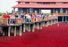 Red Beach หาดทรายสีแดงเลือด