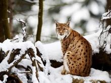 สัตว์โลกน่ารัก ธรรมชาติงดงาม