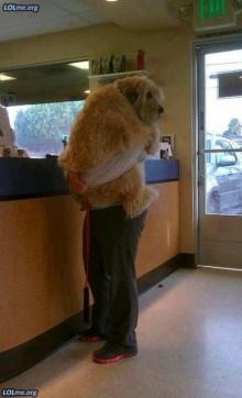 น้องหมาตัวบิ๊กๆ ในอิริยาบถที่เเสนจะน่ารัก