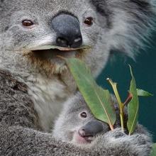 ความน่ารักของสัตว์โลกใกล้สูญพันธุ์