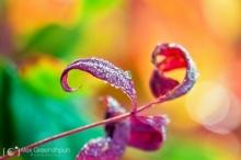 สีสันแห่งฤดูใบไม้ร่วง