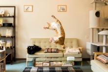 ภาพฮาๆ เมื่อแมวกระโดด