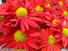 ดอกไม้งาม ๆ