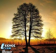 ต้นไม้ สวยๆ