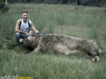 Animals Hunting