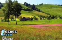 สี เขียว ของ ท้อง หญ้า ดู แล้ว สบาย ตา