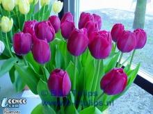 ดอกใม้สวยๆสำหรับคนเม้นที่น่ารักทุกคน