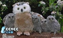 animal cute >.<