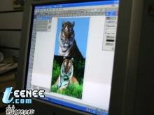 เทคนิคการถ่ายภาพเสือในป่า...