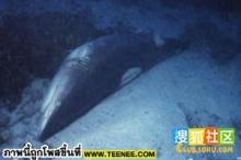 กว่าจะเป็นหูฉลามให้รับประทานกัน โอว์อนาถ!!