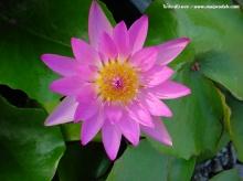 ต้อนรับยามเช้าด้วยดอกไม้สวยสีสันสดใส