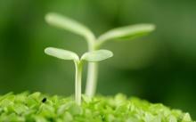 ชีวิตใหม่ ในโลกสีเขียว 1