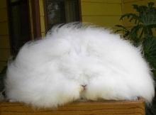 กระต่ายน้อย ปุกปุย ขนฟู น่ารักจริ๊งจริง
