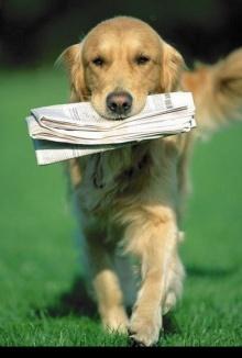 สุนัขพันธุ์แสนรู้หลายอริยบถ