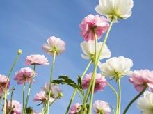 ดอกไม้สวย ..