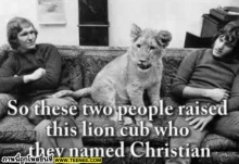 christian the lion :: มิตรภาพระหว่างคนกับสิงโต ซึ้งมาก T^T