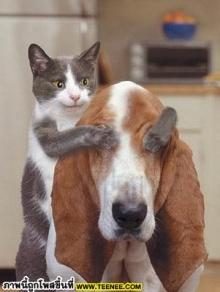 ขำๆ สัตว์โลก....................