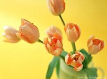 ดอกไหลากสีหลากชนิด ..