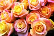 ดอกกุหลาบสวยๆ สำหรับคนที่คุณรัก  (2)