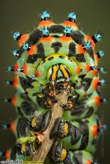 แมง & แมลง