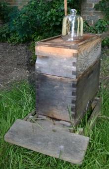 โหลน้ำผึ้งพร้อมรังแบบสำเร็จรูป