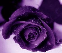 .. สดชื่นกับดอกไม้ยามเช้า .. (o^.^o)