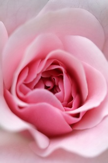 .. The flowers of happiness you can touch ..(o^.^o) 2