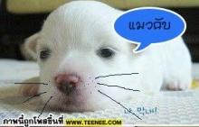 นี้คือภาพผู้บ่าวกินแมว... ที่กำลังเป็นข่าว