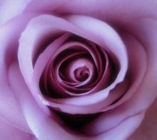 Roses:Symbol Of Indispensable Love .•°•.° ღღღ 2