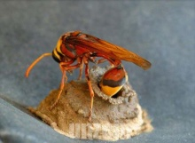 Wasp Homebuilding
