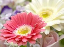 Macro Focus Flowers.•°•.° ღღღ 3