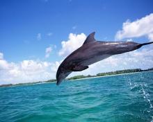 Funny Dolphin•°•.° ღ. 2