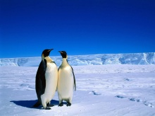 ••penguin••°•.°(o^.^o)