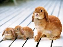 o--- แด่กระต่ายที่ฉันรัก ---o ( II )