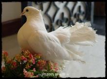 The Elegance of Royal Pigeons