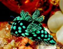 โลกใต้ทะเลที่รัก !! (2)