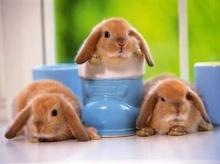 กระต่ายน้อยน่ารัก