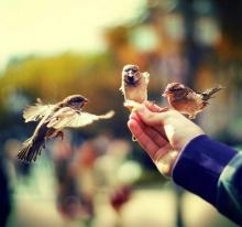 Bird Photography รูปนกสวยๆ ดีกรีความงามระดับโลก