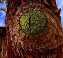 ต้นไม้แปลกๆ...ดูแล้วหลอน!!