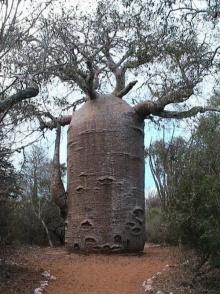 ต้นไม้ที่มหัศจรรย์ที่สุดในโลก