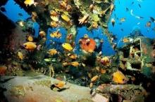 แนวปะการังรถยนต์ใต้ท้องทะเลลึก