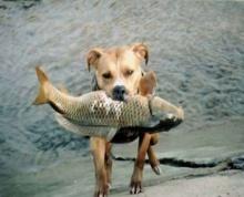เมื่อน้องหมา จับปลาเองได้!!(เก่งซะ)