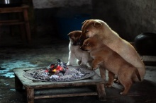 มะหมาพี่น้องรุมผิงไฟแก้หนาวในจีน