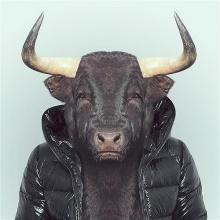 ภาพสัตว์ป่าในชุดเสื้อผ้ามนุษย์