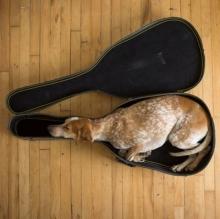 ภาพฮาๆ เมื่อสัตว์เลี้ยงนอนในที่ที่ไม่ใช่ของมัน