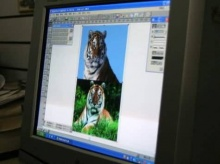 นี่คือ...เทคนิกการถ่ายภาพเสือโคร่งในป่า(555)