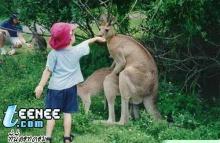 เหตุผลที่ไม่ควรพาเด็กไปสวนสัตว์