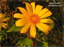 ดอกไม้ประจำจังหวัด 2