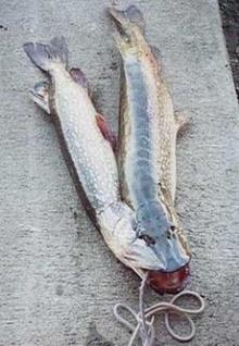 ป.ปลานั้นหายาก..(saki)