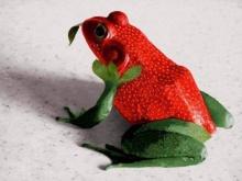 Unusual  Animal